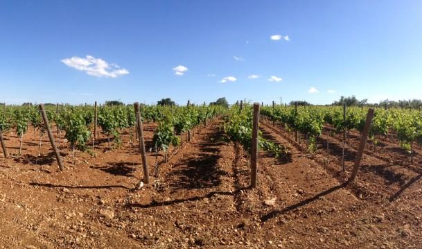 Nieuw wijnhuis uit Puglia
